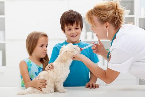 Vaccinations  Elk Grove, CA